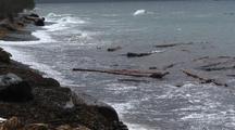 Storm Scene. Driftwood, Sea Birds,  High Winds, Rain, And Storm Surge.