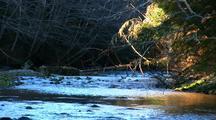 A Small Stream Full Of Birds (Ducks)