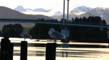 Sea Gulls Sitting On A Piling, A Highway Bridge, And A Passing Boat.