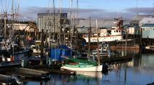 Boat Harbor & Sea Birds