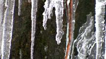 Water Dripping Down And Through Icicles