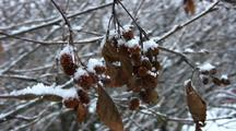 Snow Storm, Snow Lands On Dead Leaves