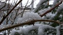 Winter Scene: Snow Piling Onto A Branch.
