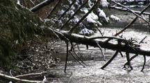 Winter Scene: Snow Storm & Small Stream