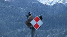Navigation Aid & Bald Eagles