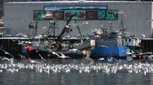 Gulls & Sea Birds Feeding Near A Fish Processing Plant