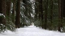 Winter Scene:  A Snow Covered Lane.