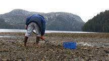 Digging For Clams & Mussels