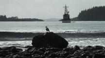 Coast Guard Cutter & Sea Birds(Gull)