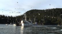 Commercial Fishing: Fish Tenders & Gulls