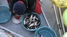 Research Fish Technician & Herring