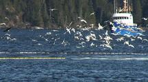 Commercial Fishing: Bald Eagles And Gulls