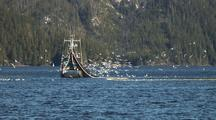 Diving Eagles And Gulls: Sitka Sound Sac Roe Herring Fishery And Bald Eagles