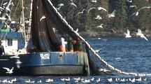 Birds Around Commercial Fishing Boat: Sitka Sound Sac Roe Herring Fishery