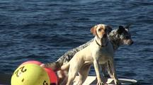 Two Dogs In A Boat : Alaska Radar
