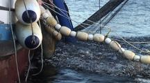 Alaska Herring Fishery Stock Footage