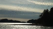 Sea Birds Massing