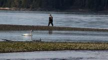 A Fly Fisherman Shares A Lonely Beach With A Trumpeter Swan.