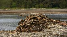Logging Debris: Rusting Cables Piled On Beach