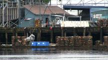 Crab Pots & Fish Processing Plant