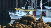 Bald Eagle & Commercial Fishing Boat