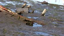 Remains Of A Boat In A Mud Flat.