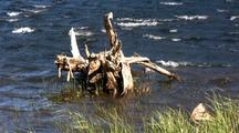 Windy Alpine Lake, Sedge Grass And A Old Tree Stump