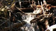 A Stream Clogged With Logging Debris By Clear Cutting