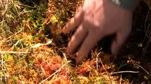 Rainforest: Sphagnum Moss