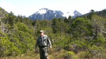 A Hiker Walks Through The Tongass Rainforest In Alaska. Alpine Muskeg Environment