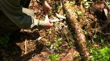 Bones:  Hiker Finds Bones From A  Deer Winter Kill.
