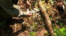 Bones:  Hiker Finds Bones From A  Deer Winter Kill.