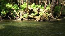 Rain Forest  Stream.
