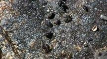 Tide Pool: Hermit Crabs
