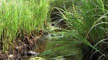 Tide Pool: A Small Salt Marsh Creek.