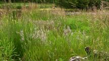 Tidal Estuary: Grasses And Sedges In A Wet Land
