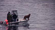 Dogs On Bow Of Boat, Alaska Radar