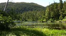 Alpine Lake: Beaver Pond