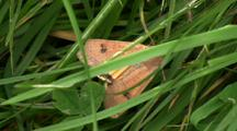 Moth On Grass