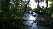 Sun Reflects On Small Salmon Stream