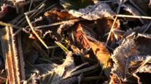 Pan Of Frost On Forest Litter
