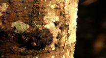Flies On Tree Bark
