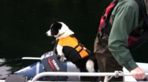 Dog Rides In Boat