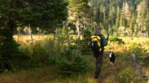 Hiker/Hunter With His Dog Enter Muskeg