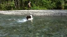Fishermen & Dog/Hikers Cross A Stream