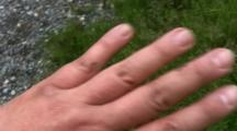 Mosquitoes On Hand
