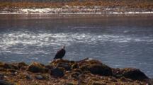 Scenic Beach And Bald Eagle