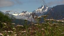 Wild Flowers And Scenery