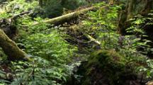 Small Overgrown Woodland Stream
