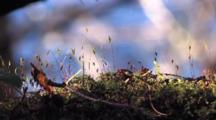 Close-Up Of Lichen And Moss With A Moving Water Background